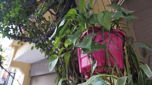 Nhà cây 5 tầng phủ kín hoa giấy ở Hà Nội, ai đi qua cũng dừng lại ngắm - 9