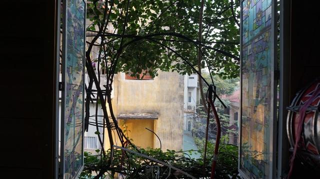 Nhà cây 5 tầng phủ kín hoa giấy ở Hà Nội, ai đi qua cũng dừng lại ngắm - 13
