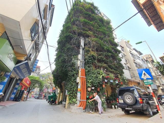 Nhà cây 5 tầng phủ kín hoa giấy ở Hà Nội, ai đi qua cũng dừng lại ngắm - 15