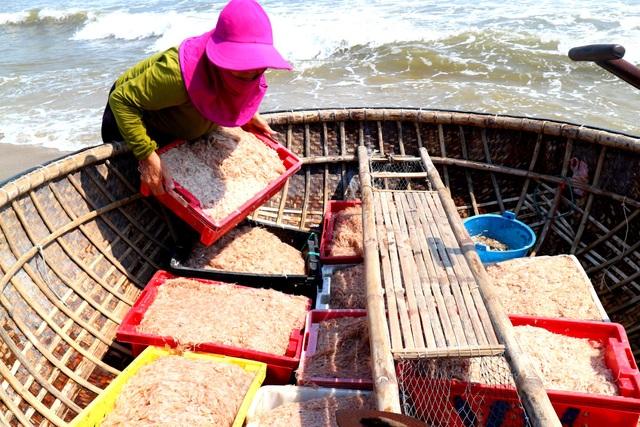 Ngư dân Quảng Nam trúng mùa ruốc biển - 2