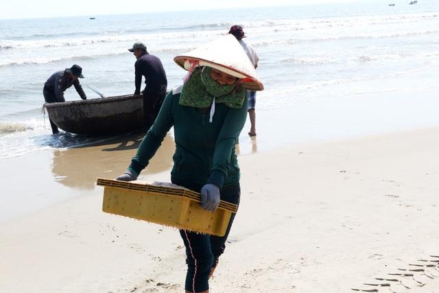 Ngư dân Quảng Nam trúng mùa ruốc biển - 4
