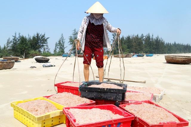 Ngư dân Quảng Nam trúng mùa ruốc biển - 6