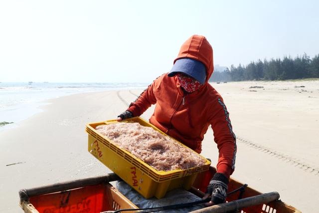 Ngư dân Quảng Nam trúng mùa ruốc biển - 7