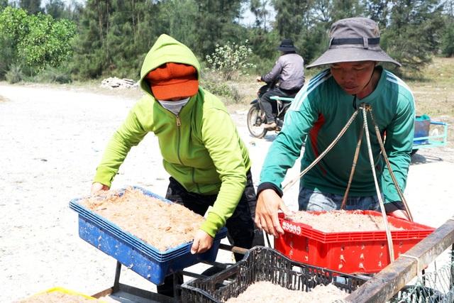Ngư dân Quảng Nam trúng mùa ruốc biển - 8