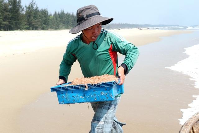 Ngư dân Quảng Nam trúng mùa ruốc biển - 9