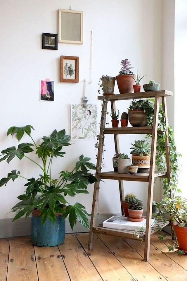 Trồng ngay 5 loại cây này trong nhà, vừa hút khí độc vừa làm đẹp không gian - 1