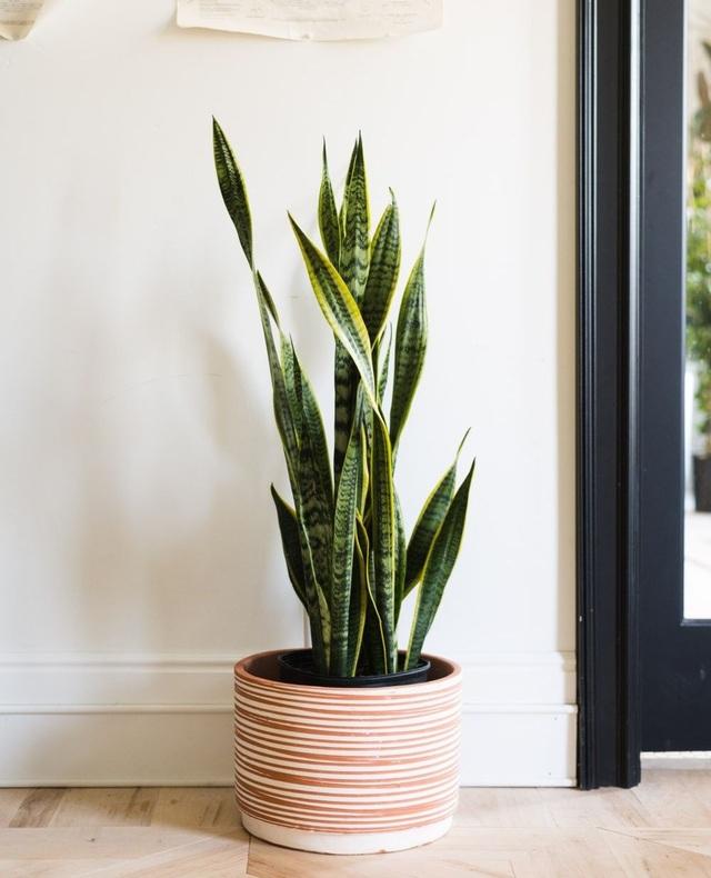Trồng ngay 5 loại cây này trong nhà, vừa hút khí độc vừa làm đẹp không gian - 2