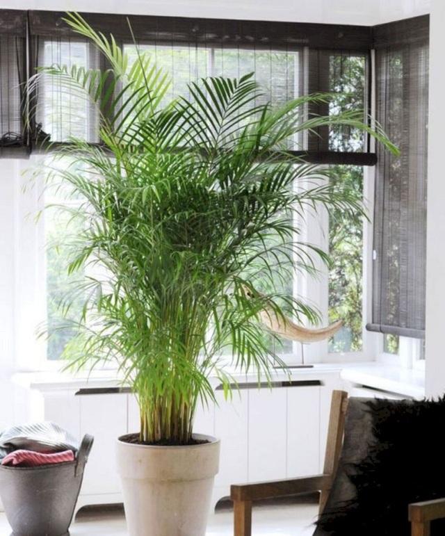 Trồng ngay 5 loại cây này trong nhà, vừa hút khí độc vừa làm đẹp không gian - 3