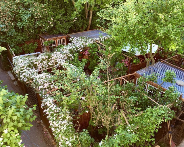 """Ngắm vườn cây đủ hoa trái gây """"sốt"""" của nhà thiết kế thời trang ở Đan Mạch - 2"""