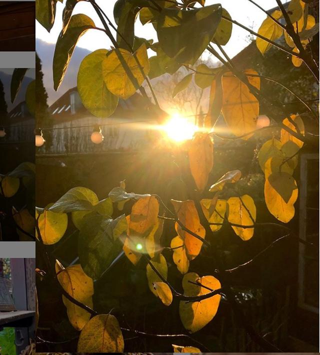 """Ngắm vườn cây đủ hoa trái gây """"sốt"""" của nhà thiết kế thời trang ở Đan Mạch - 8"""