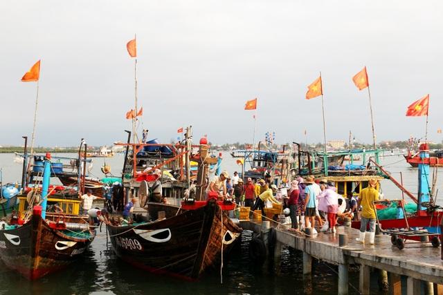 Ngư dân Quảng Nam được mùa cá cơm - 1