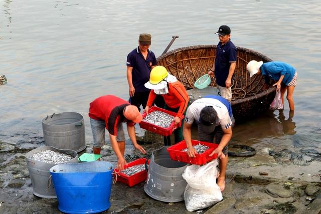 Ngư dân Quảng Nam được mùa cá cơm - 10