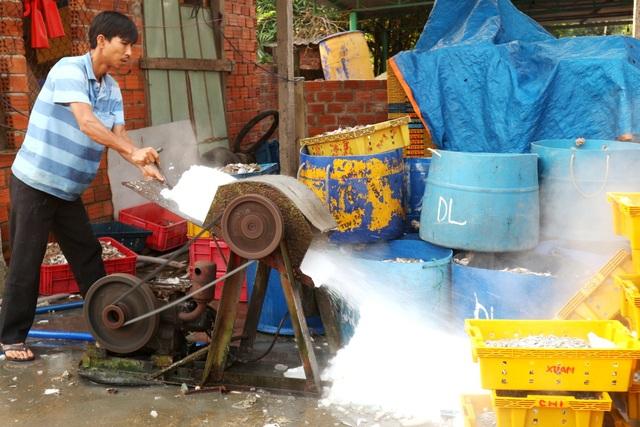 Ngư dân Quảng Nam được mùa cá cơm - 12