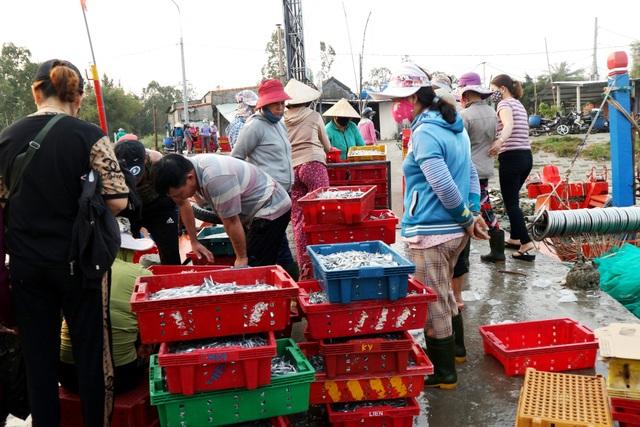 Ngư dân Quảng Nam được mùa cá cơm - 2