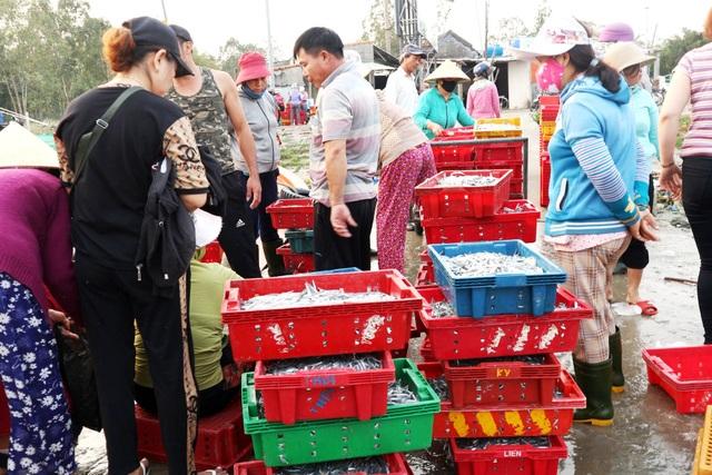 Ngư dân Quảng Nam được mùa cá cơm - 4