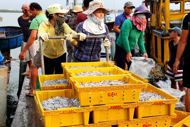 Ngư dân Quảng Nam được mùa cá cơm - 7