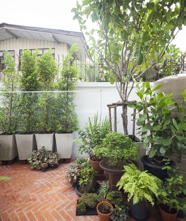 """Choáng ngợp ngôi nhà 300m2 với khu vườn bonsai toàn cây """"khủng"""" - 5"""