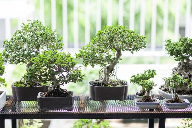"""Choáng ngợp ngôi nhà 300m2 với khu vườn bonsai toàn cây """"khủng"""" - 8"""