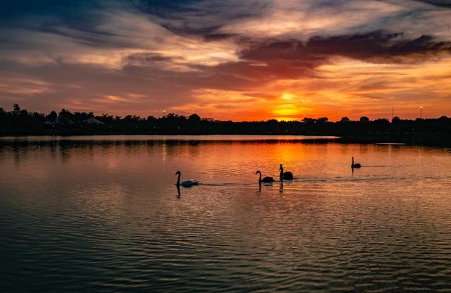 Ngắm hồ thiên nga dưới ánh hoàng hôn ngay phía Đông Hà Nội - 1