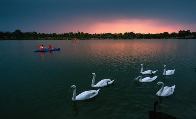 Ngắm hồ thiên nga dưới ánh hoàng hôn ngay phía Đông Hà Nội - 2