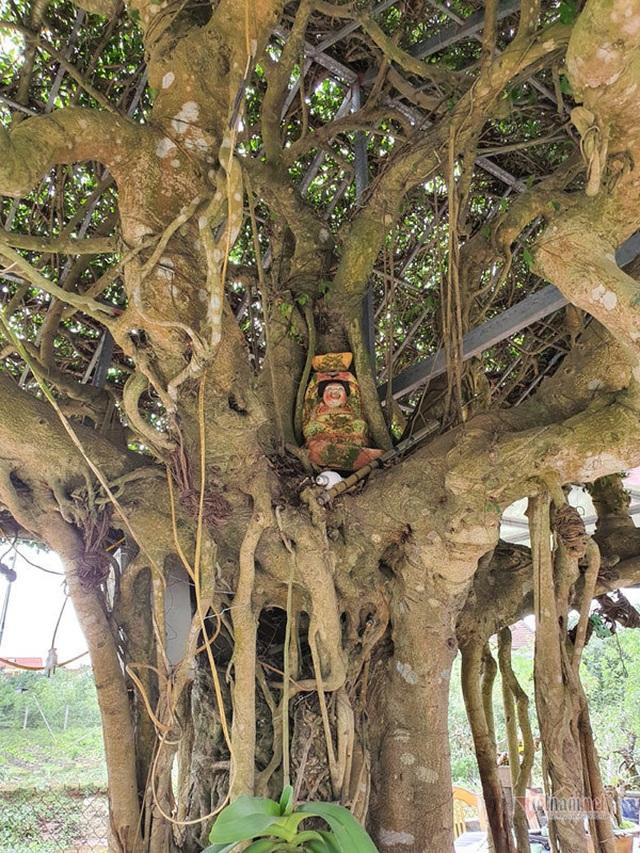Siêu cây mái đình làng cổ độc nhất Bắc Bộ - 11