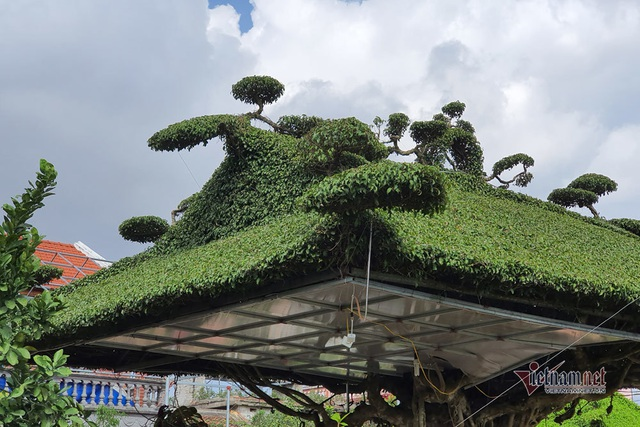 Siêu cây mái đình làng cổ độc số 1 Bắc Bộ - 3