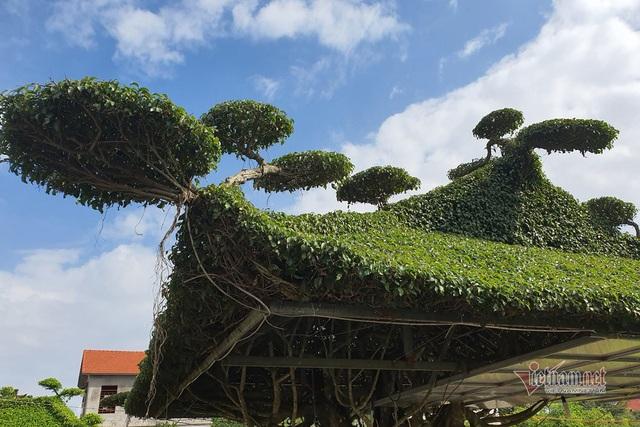 Siêu cây mái đình làng cổ độc nhất Bắc Bộ - 7