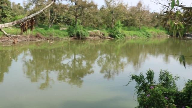 Hạn mặn khốc liệt, tìm cách cứu vườn sầu riêng của người dân - 2