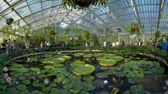 Lạc bước vào khu vườn di sản với hàng nghìn loại cây hoa độc lạ ở Anh - 2