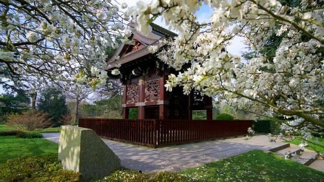 Lạc bước vào khu vườn di sản với hàng nghìn loại cây hoa độc lạ ở Anh - 7