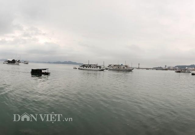 Hàng nghìn tỷ nổi giữa vịnh Hạ Long, chủ tàu như ngồi trên đống lửa - 5