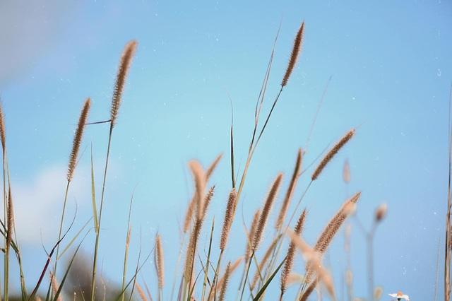 Mê mẩn mùa cỏ cháy ở trên bán đảo Sơn Trà - 3