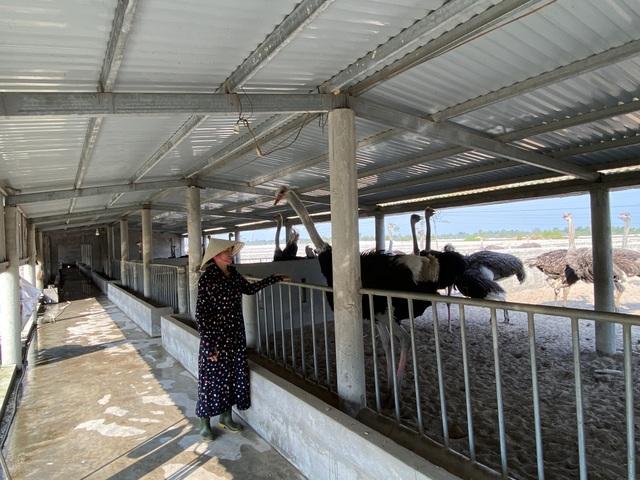 Lão nông thu gần 3 tỷ đồng/năm từ trại đà điểu độc nhất miền cát - 8
