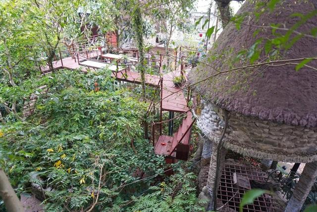 Kỳ lạ quần thể nhà xây dựng trên cây cổ thụ trăm tuổi độc nhất Hà Nội - 1