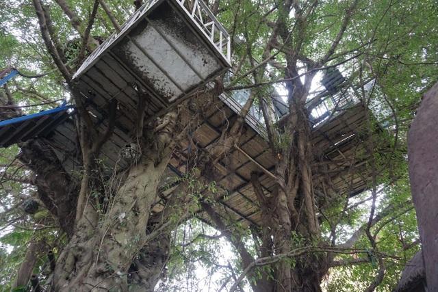 Kỳ lạ quần thể nhà xây dựng trên cây cổ thụ trăm tuổi độc nhất Hà Nội - 7