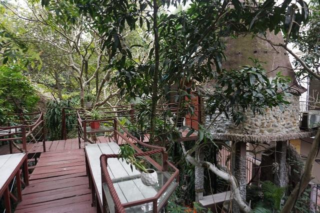Kỳ lạ quần thể nhà xây dựng trên cây cổ thụ trăm tuổi độc nhất Hà Nội - 8
