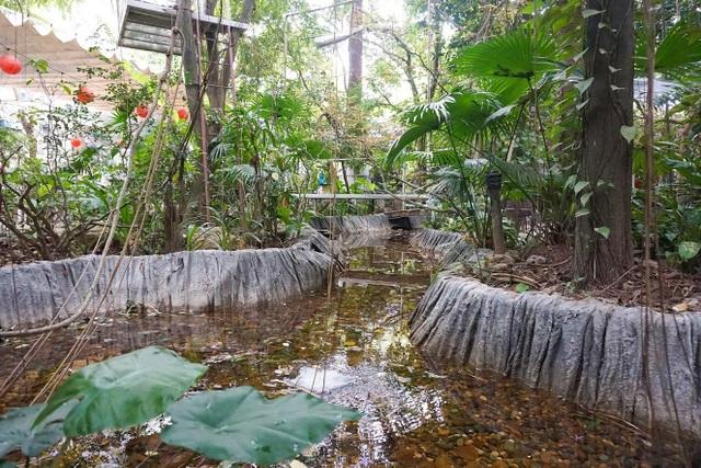 Kỳ lạ quần thể nhà xây dựng trên cây cổ thụ trăm tuổi độc nhất Hà Nội - 13