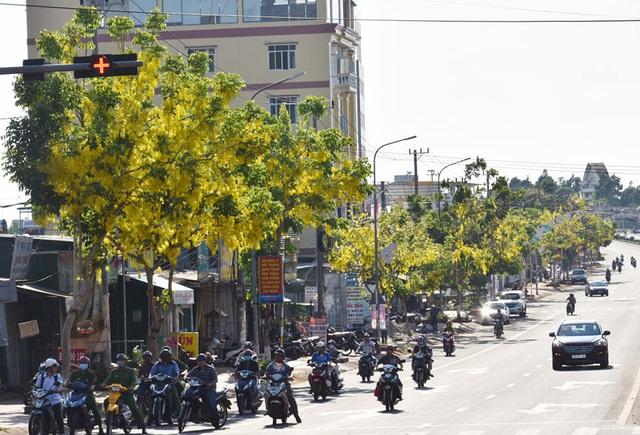 Thành phố trẻ nhất Tây Nguyên rực rỡ sắc vàng của hoa osaka - 9