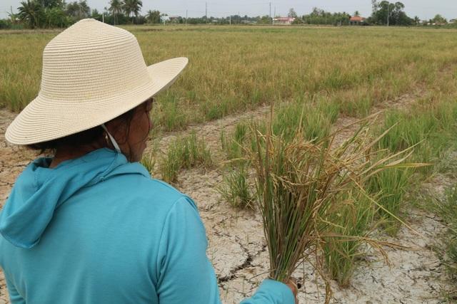 Ruộng đồng chết khô, miền Tây quay quắt trong cơn hạn, mặn - 7