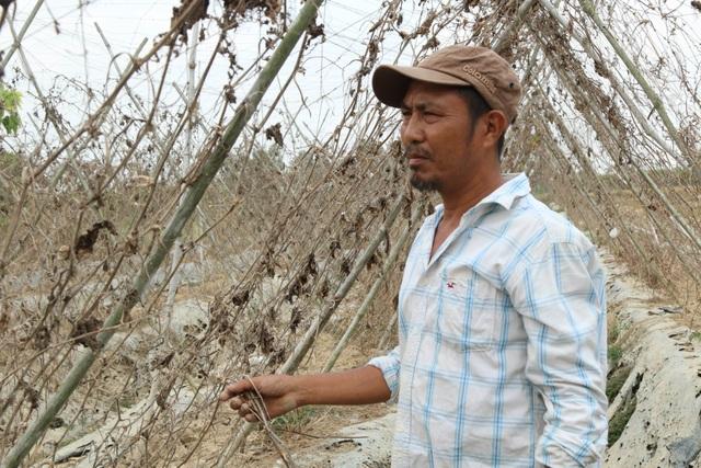 Ruộng đồng chết khô, miền Tây quay quắt trong cơn hạn, mặn - 6