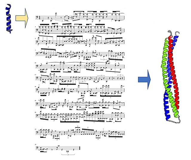 Học máy tạo ra protein mới bằng cách dịch protein thành… các bản nhạc - 1
