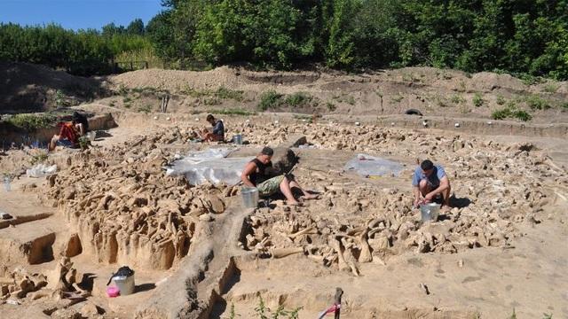 Bí ẩn vòng tròn xương voi ma mút mới được phát hiện ở Nga - 1