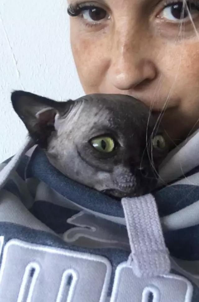 Lạ mắt với cô mèo dơi khiến cư dân mạng phát cuồng - 3