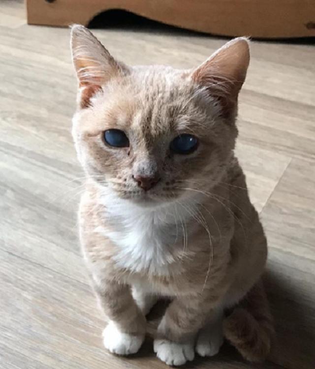 Lạ mắt với cô mèo dơi khiến cư dân mạng phát cuồng - 6