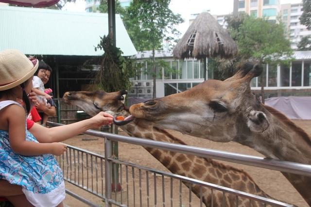 Vườn thú lâu đời nhất Việt Nam đóng cửa tránh dịch bệnh Covid-19 - 1