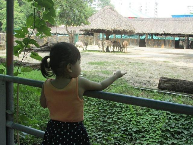 Vườn thú lâu đời nhất Việt Nam đóng cửa tránh dịch bệnh Covid-19 - 2