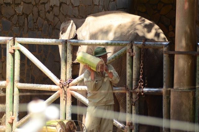 Vườn thú lâu đời nhất Việt Nam đóng cửa tránh dịch bệnh Covid-19 - 3