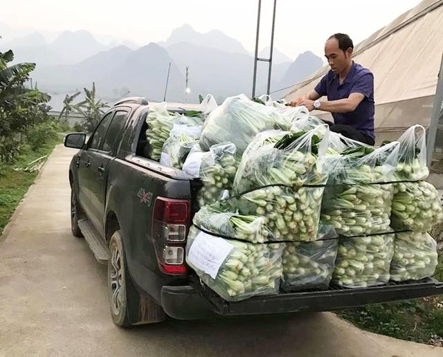 """Chủ vườn ở Lai Châu """"hái"""" 2 tấn rau ủng hộ người cách ly ở Hà Nội - 2"""