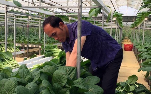"""Chủ vườn ở Lai Châu """"hái"""" 2 tấn rau ủng hộ người cách ly ở Hà Nội - 7"""