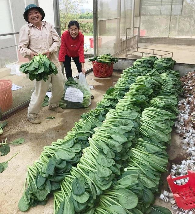 """Chủ vườn ở Lai Châu """"hái"""" 2 tấn rau ủng hộ người cách ly ở Hà Nội - 10"""